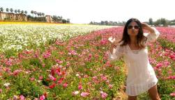 Flower fields in Carlsbad, CA.
